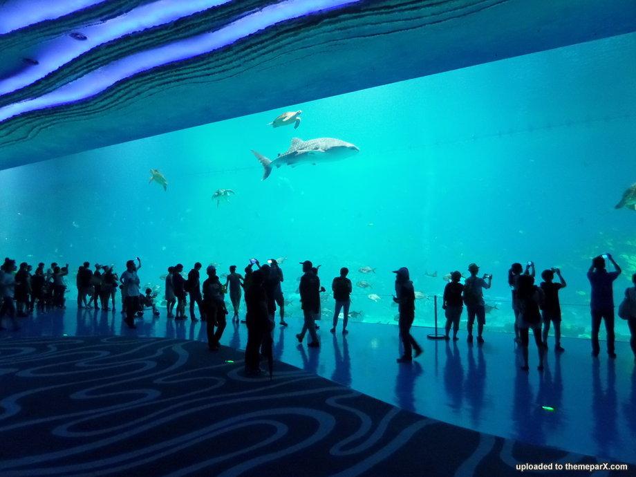 Name:  chimelong-ocean-kingdom-29.jpg Views: 3017 Size:  96.7 KB