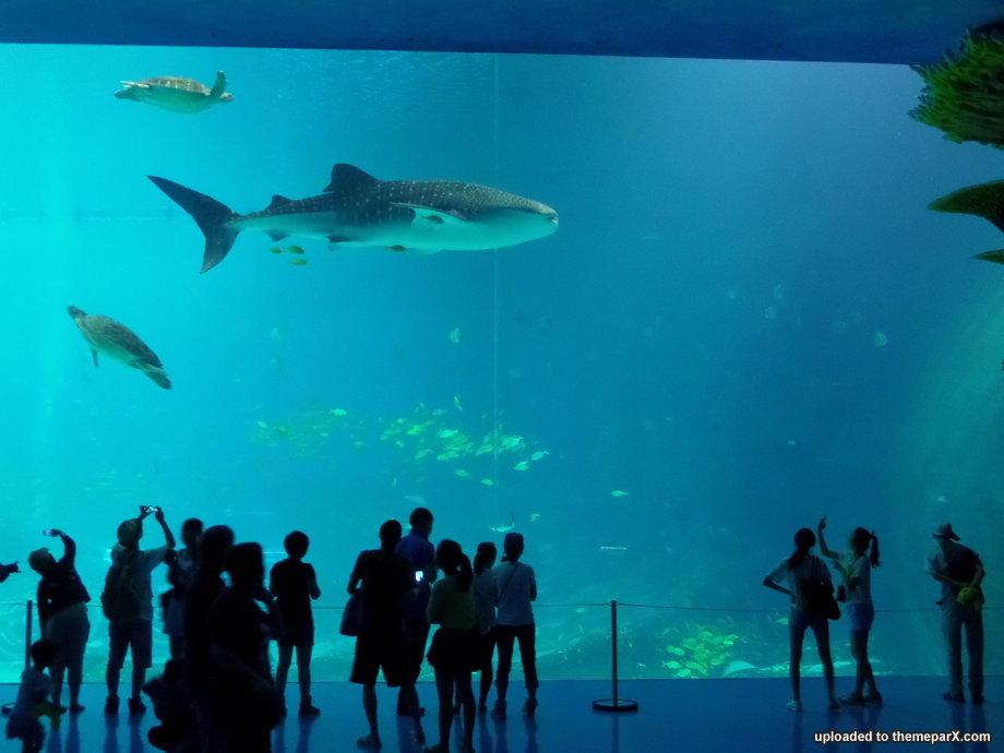 Name:  chimelong-ocean-kingdom-30.jpg Views: 3109 Size:  70.9 KB