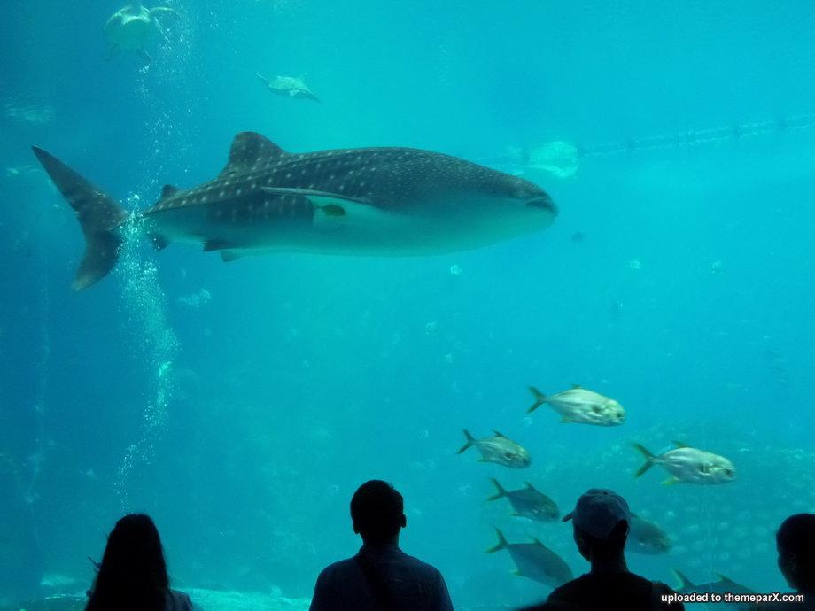 Name:  chimelong-ocean-kingdom-31.jpg Views: 2896 Size:  56.2 KB